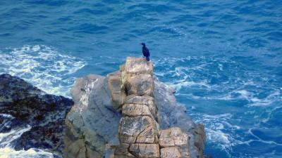 33NF2015 - Jornadas do Mar – Exploração sustentável dos recursos marinhos